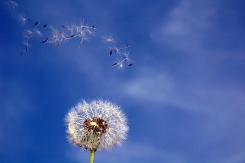 Ozonitzadors d'aire per combatre les al·lèrgies - 4ba07-polen.png