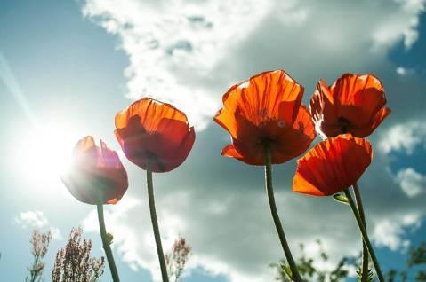 Neutralització de males olors a l'estiu - 544d9-flower-399409_1920.jpg