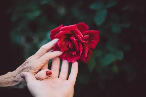 Petons d'una mare, el més gran del món. Article de Carles Capdevila. - 66b07-bloom-1846200_960_720.jpeg